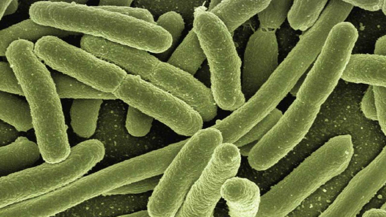 Bacteria, Protists, and Viruses Science Lesson