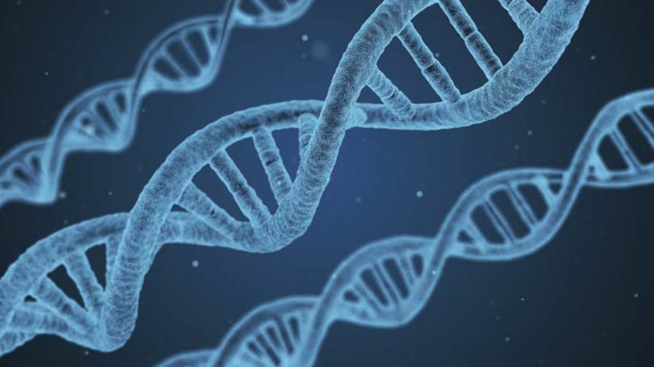What is DNA? Science Lesson: Structure & Replication