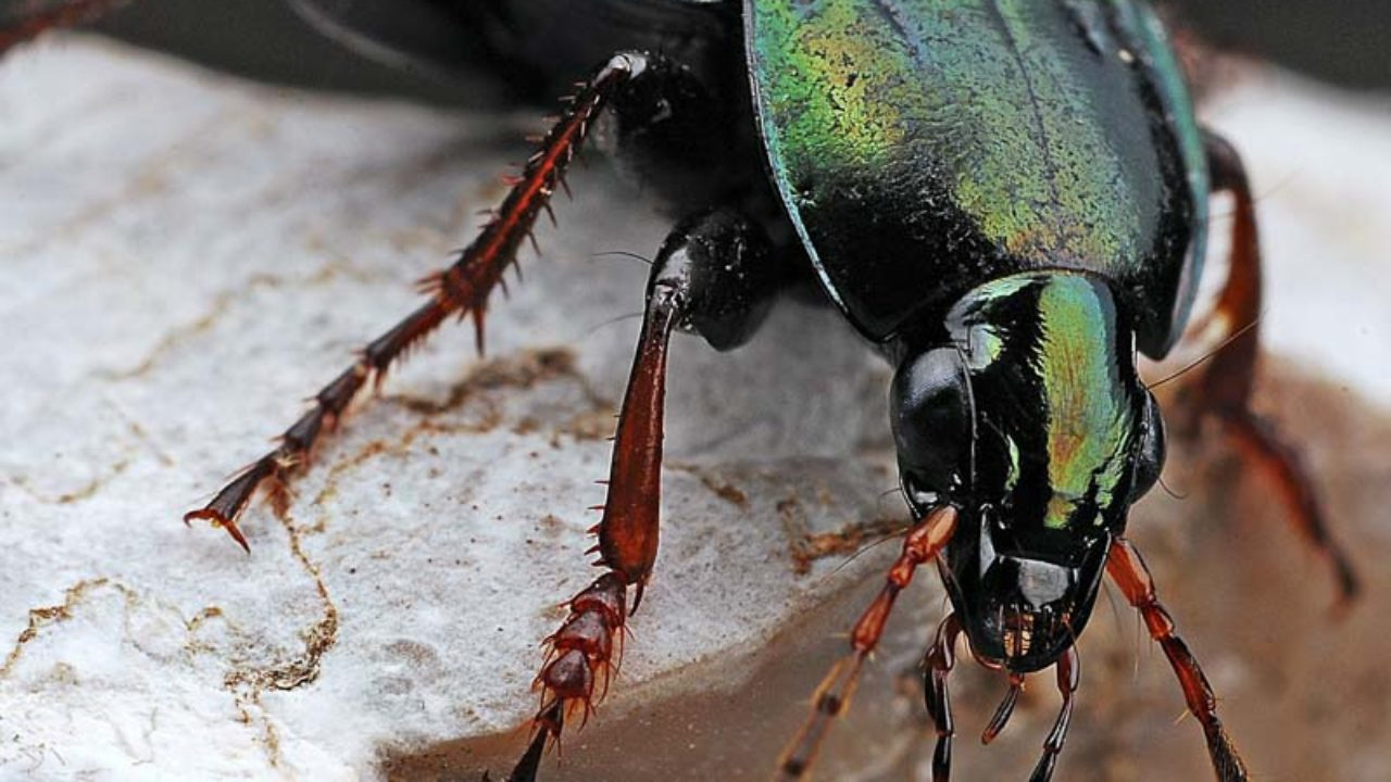 All About Beetles | Insects Science Lesson for Kids